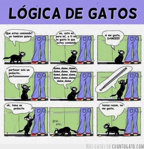 gatos Memes animales - 8026192640