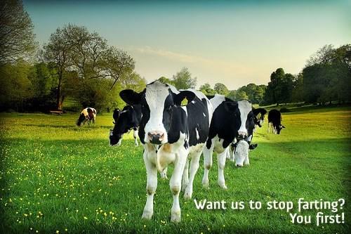 wtf farts Germany animals cows - 8026357504