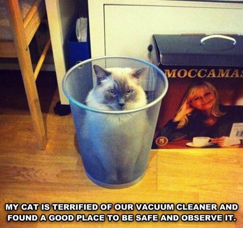 cute hide Cats funny vacuum - 8026373888