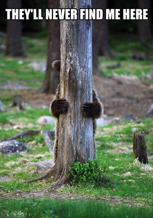 Forest disguise FAIL camo bears cute funny