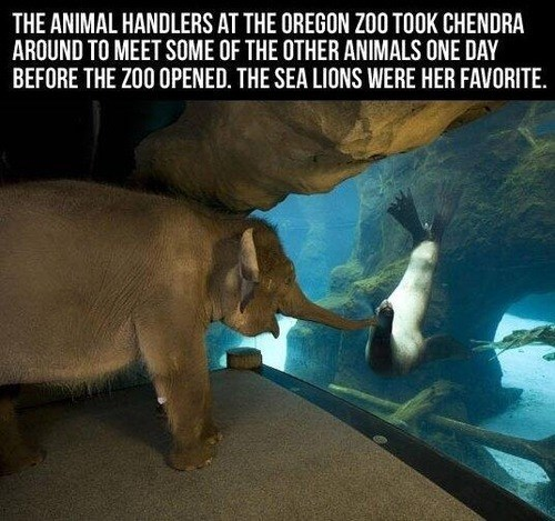 friends zoo seals cute elephants - 8026547712