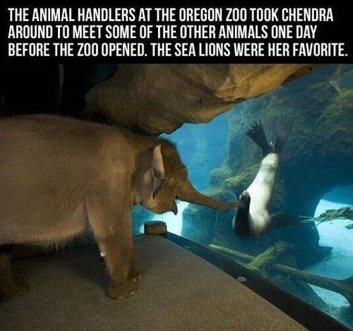 friends zoo seals cute elephants - 8026547712