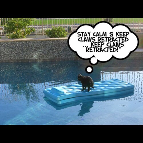 float,toys,pools,claws,Cats,concentrate,funny