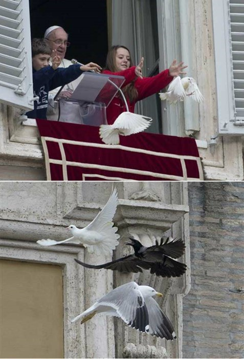 whoops,birds,pope francis