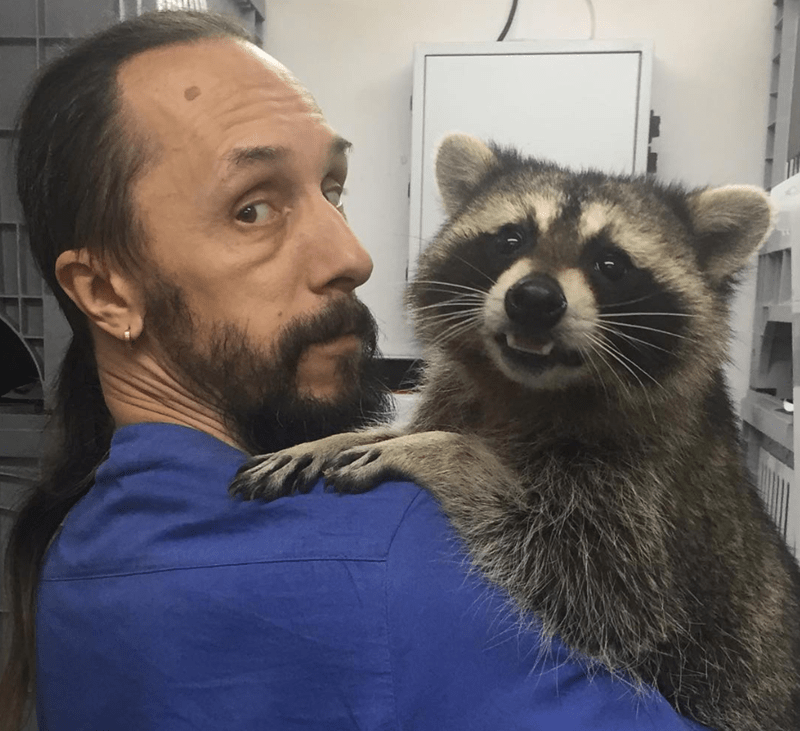 calming russia pets clinic vet raccoons - 8026629