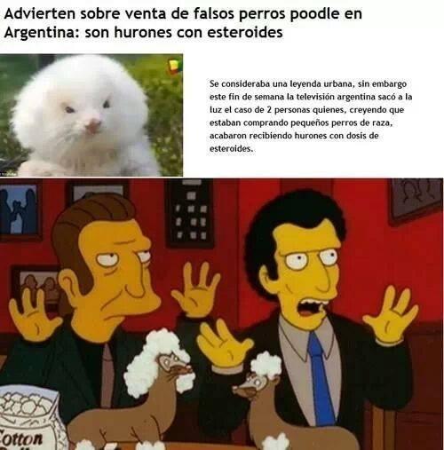 perros noticias FAIL Memes - 8026650112