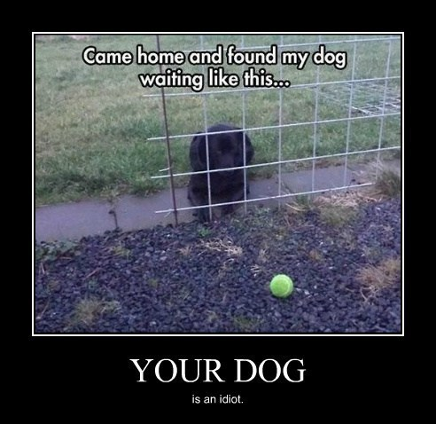 dogs ball idiot funny - 8026726400