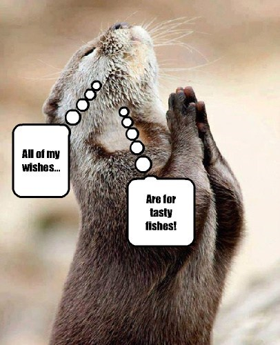 cute,fish,prayer,otters