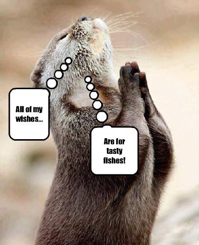 cute fish prayer otters - 8027186944