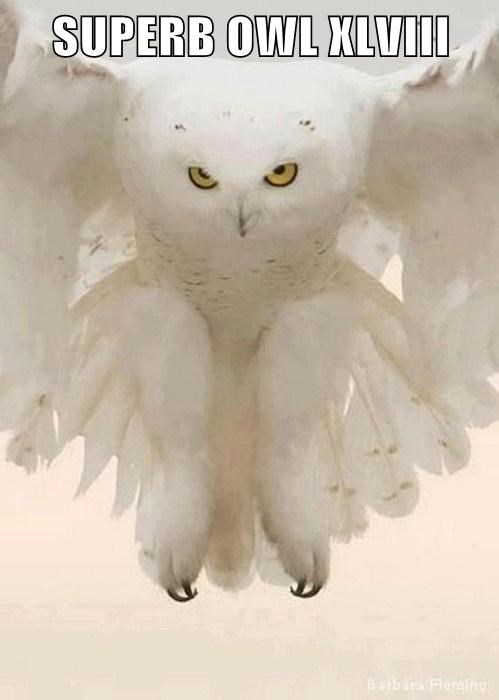 puns owls super bowl XLVIII - 8027190272