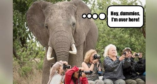 tourists,elephants,dummies