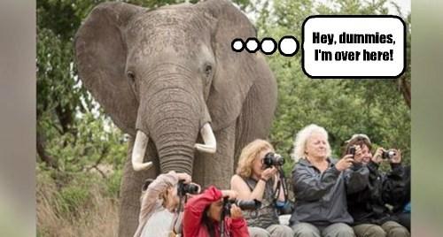 tourists elephants dummies