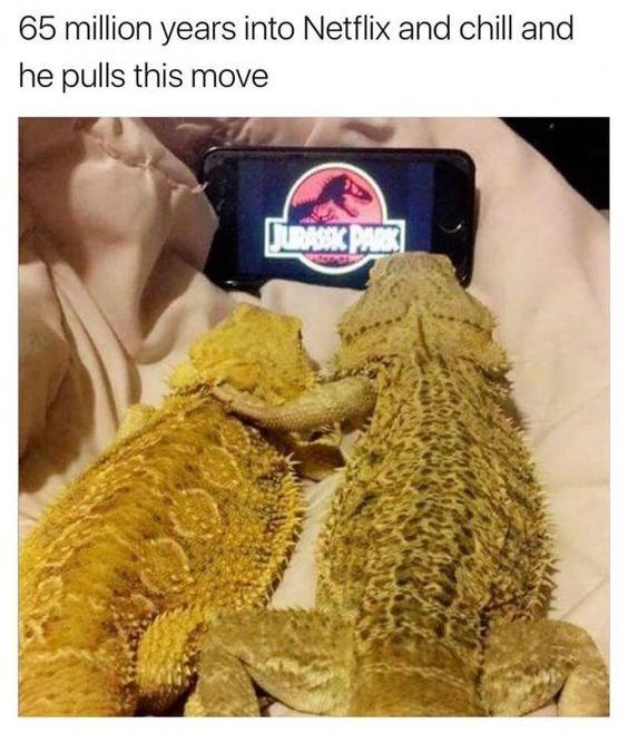 pets funny memes Memes netflix animal memes animals - 8027397