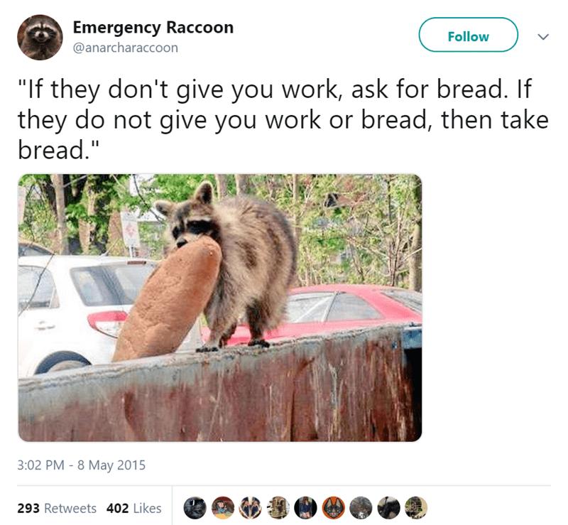 funny tweets raccoons animal tweets - 8027653