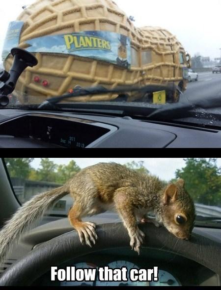 driving,peanuts,funny,puns,squirrels