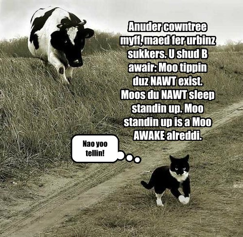 Anuder cowntree myff, maed fer urbinz sukkers. U shud B awair: Moo tippin duz NAWT exist. Moos du NAWT sleep standin up. Moo standin up is a Moo AWAKE alreddi. Nao yoo tellin!