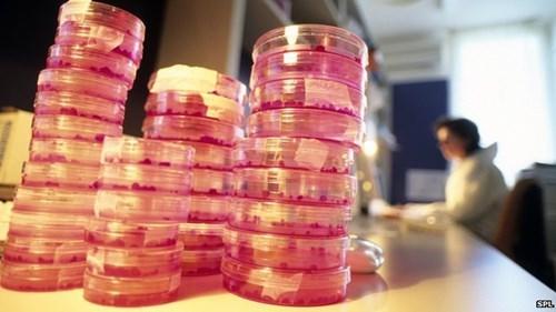 medicine awesome stem cells science - 8028342272