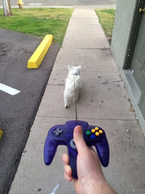 Memes fotos videojuegos animales - 8028575744