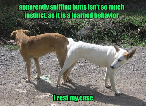 dogs funny instinct learned behavior