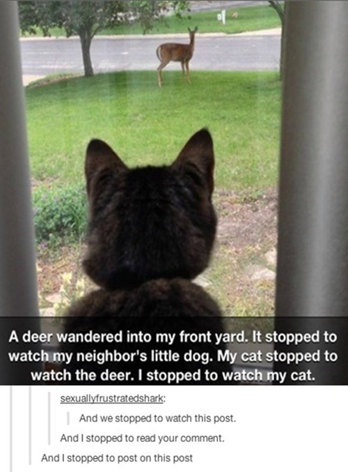 Cats,deer,dogs,funny,pattern