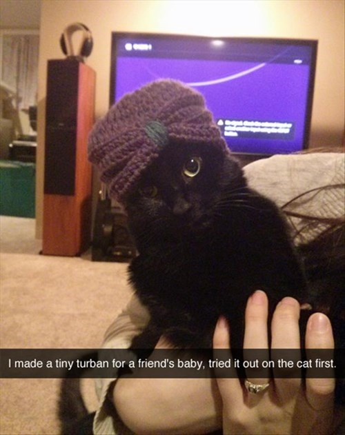 Babies,Cats,cute,turban,knitting