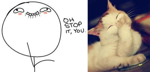 Memes animales gatos caras - 8028848896