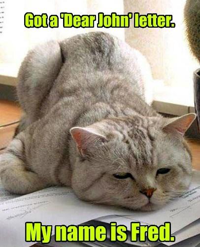 Cats funny literature - 8028874240