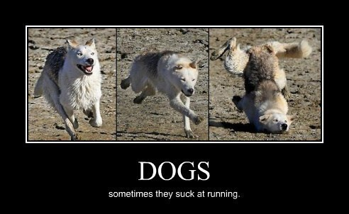 dogs nerds funny running unathletic animals - 8028897792