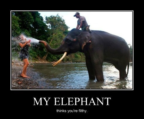 animals,bath,elephant,dirty,filthy