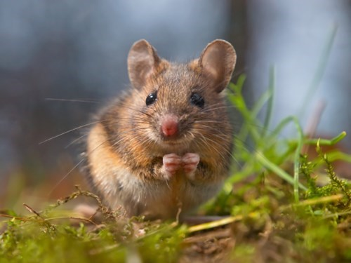 cute mice nature puns - 8028945152