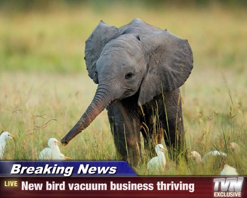 Breaking News - New bird vacuum business thriving