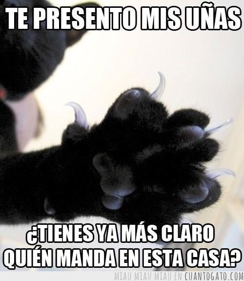 Memes animales gatos - 8029918208