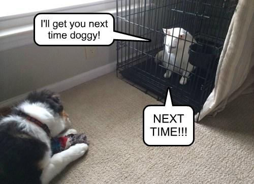 dogs revenge Cats funny - 8029918464