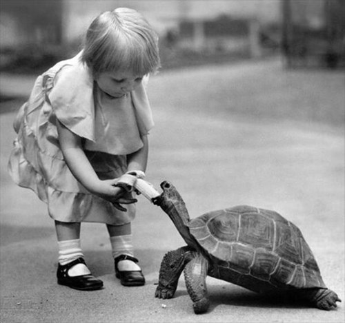 kids,sharing,parenting,tortoise