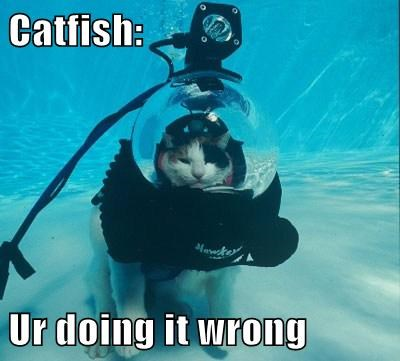 fish Cats scuba diving