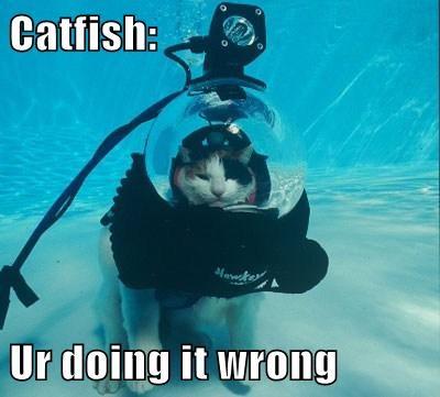 fish Cats scuba diving - 8029994496
