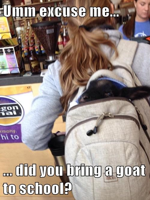 school,kids,goats,cute,backpack