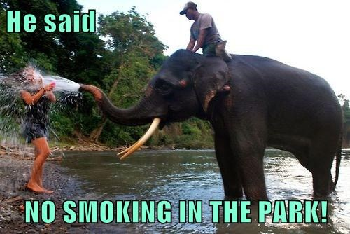 rules,water,park,elephants,smoking,funny