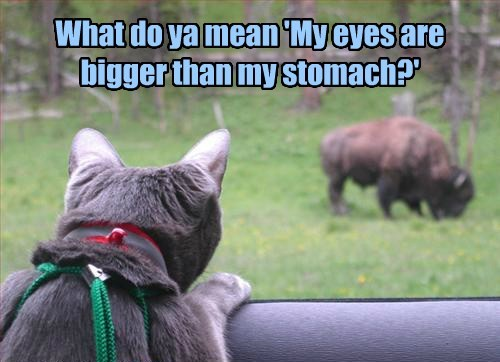 eat moms buffalo Cats funny