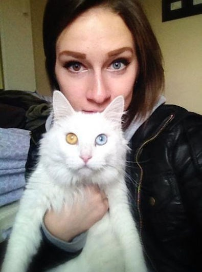 genes,eyes,cute,Cats,funny