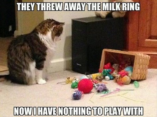 toys milk ring play Cats funny - 8030364160