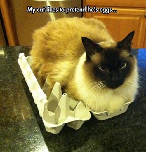 eggs puns Cats funny - 8030373376