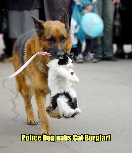 dogs Cat Burglar Cats funny police - 8030471424