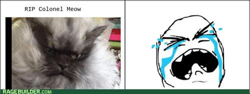 Sad Cats - 8030765824
