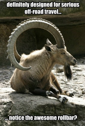 nature,Rams,goats,funny
