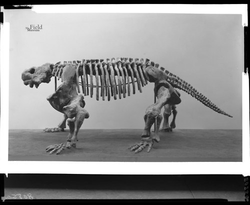 archeology,dinosaurs,funny,science,skeleton,bradysaurus