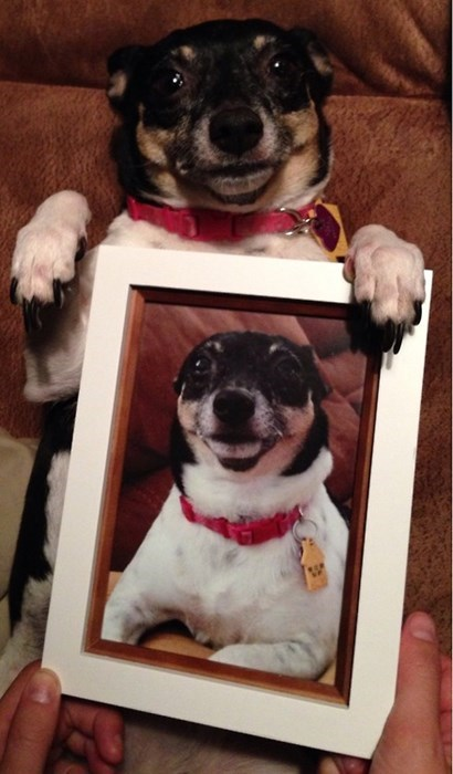 dogs photos funny portrait vain