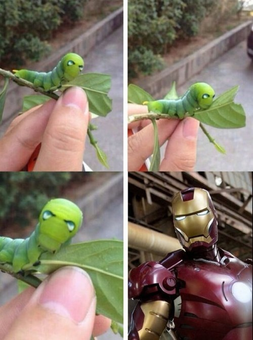 animals caterpillars iron man metamorphosis - 8031625472
