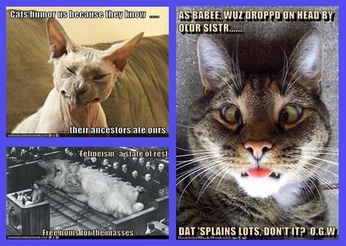 Cats lols featured user OldGrayWhistletester - 8031655680