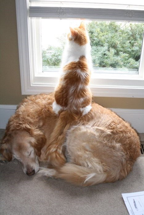 Cats,cute,dogs,sleeping,teamwork